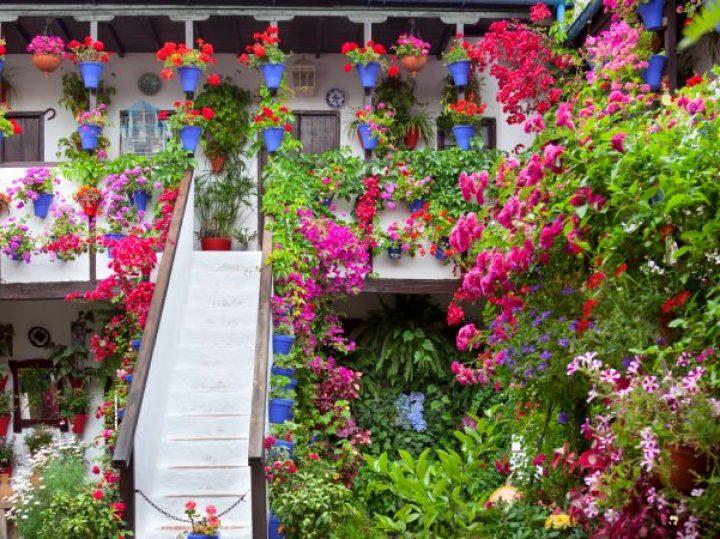 Los patios de Córdoba: de estilo de vida a fiesta popular