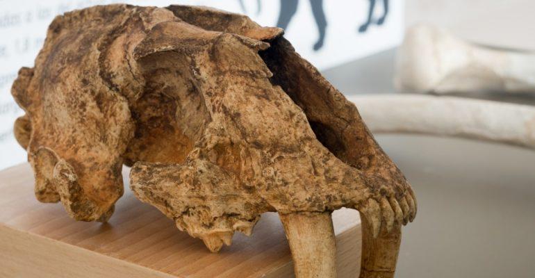 7 yacimientos prehistóricos del sur de España, una cuna particular de la civilización