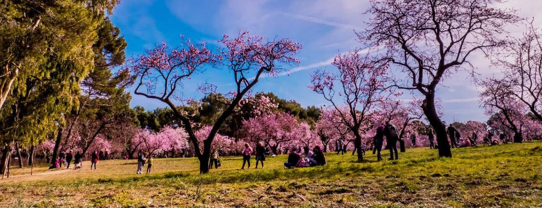 La floración en la Quinta de los Molinos