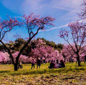 Quinta de los Molinos, un jardín histórico en la capital   El Rincón del Finde