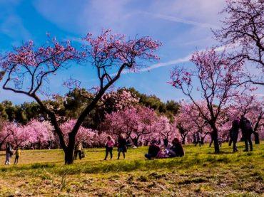 Quinta de los Molinos, un jardín histórico en la capital | El Rincón del Finde