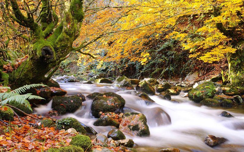 Curso del río Nalón en un paisaje otoñal del Parque Natural de Redes