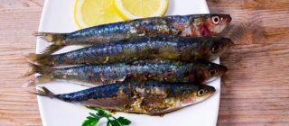 sardinas pontedeume
