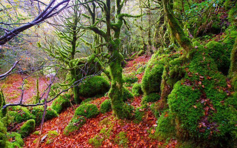 Imagen de la Selva de Irati en otoño.