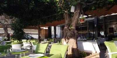 comer soller restaurante ses oliveres
