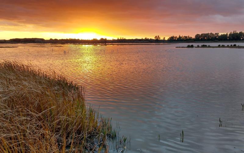 Marismas de Huelva. | Shutterstock