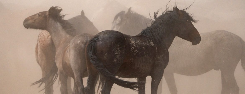 Caballos salvajes en el desierto de Utah