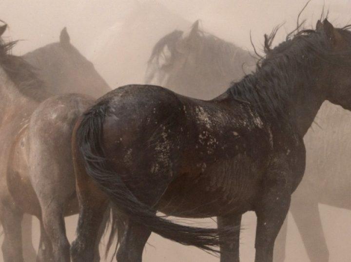 El salvaje oeste andaluz, verdadero origen de los cowboys