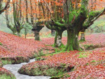 Hayedo de Otzarreta, un placer para los 5 sentidos | El rincón del finde