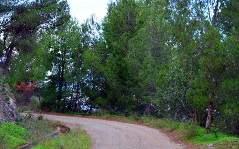 Camino de la Cañada Vargas hacia el Yacimiento El Maraute, Torrenueva