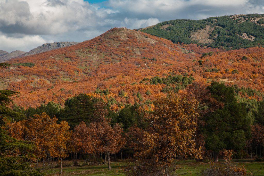Valle del Lozoya en otoño