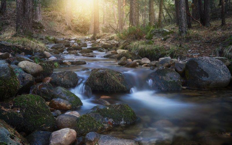 En los montes de Valsaín se encuentra el CENEAM, una entidad encargada de concienciar sobre el medio ambiente