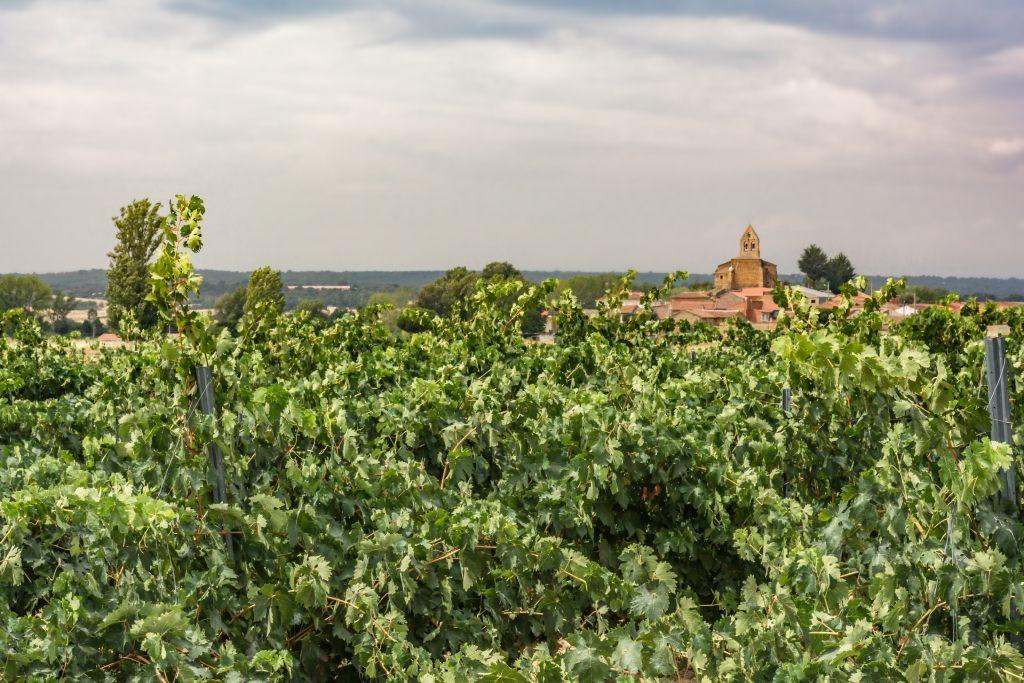 San Pedro de las Viñas