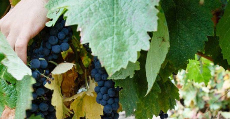 Rioja Wines in La Rioja