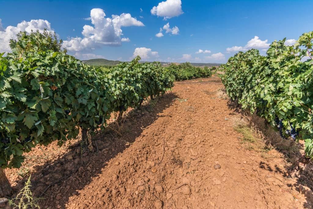 Viñas de los Vinos de Calidad Valles de Benavente